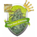 Royal Haze Automatic 10 ks Fem.
