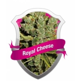 Royal Cheese - Fast, 3 ks Fem.