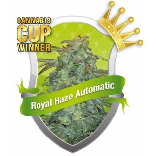 Royal Haze Automatic 5 ks Fem.