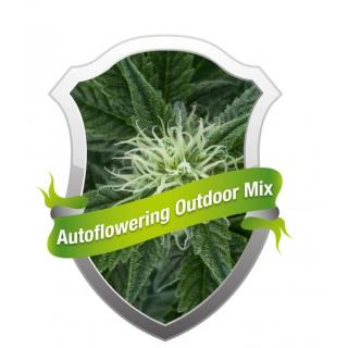 Autoflowering Outdoor Mix 10 ks fem.