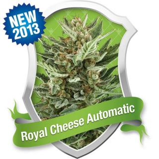 Royal Cheese Automatic 5 ks Fem.