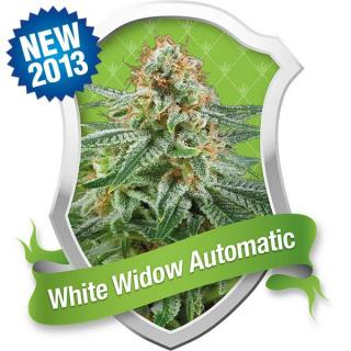 White Widow Automatic 10 ks Fem.
