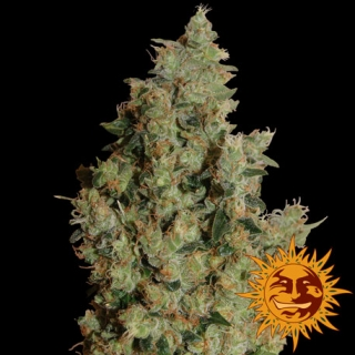Tangerine Dream, 10 ks, Fem.