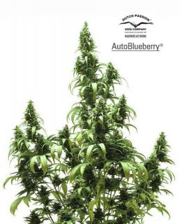 AutoBlueberry 3 ks Fem.